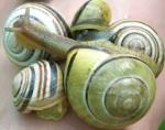 036 snails 164763
