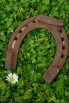 203 horseshoe 533405