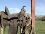 224 saddle 868720
