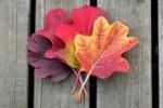 236 leaves 715132