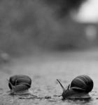 237 snails 725126