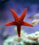 238 starfish 729983
