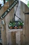 255 plant pots 125682