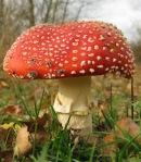 275 mushroom 635080