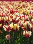 278 flowers 629614