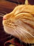 310 smug cat 648576