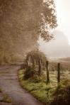 315 misty scene 778400