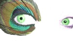 319 blue_green_peacock_eyes 778762