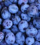 335 plums 858673