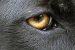368 eye 690085