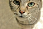 387 cat 871717
