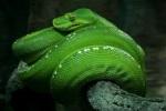 398 snake 896940