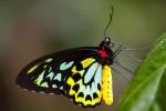 407 butterfly 763633