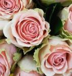 484 roses 898757
