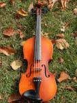 498 violin 931550
