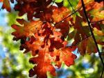 516 leaves 928670