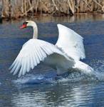 527 Mute Swan Landing 856707