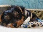 568 puppy 618644