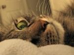 572 cat 906145