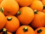 573 pumpkins 870086