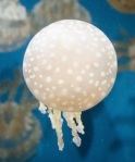 579 jellyfish 911935