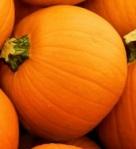638 pumpkins 870086