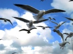 640 seagulls on flight 911349