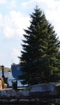 644 tree 877544