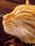712 smug cat 648576