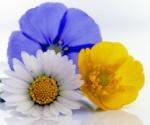 746 flowers 184924