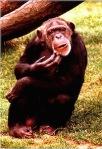 847 monkey 13878