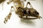1004-skeleton-780409
