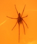 1007-spider-97622